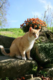 Ginger Cat Lizenzfreies Stockbild