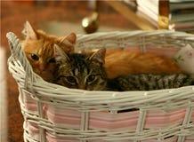 Ginger Cat Fotos de archivo libres de regalías