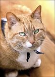 Ginger Cat Image stock