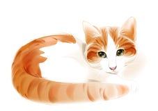 Ginger Cat Imagens de Stock