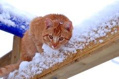 Ginger Cat photos libres de droits