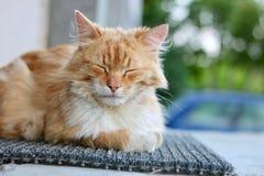 Ginger Cat immagini stock libere da diritti