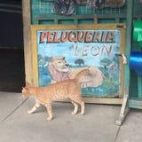 Ginger Cat Acts Like ett lejon royaltyfri fotografi
