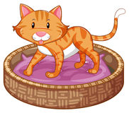 Ginger cat in basket. Illustration Stock Photos
