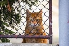 Ginger cat behind a fence Stock Photos