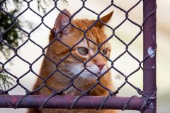 Ginger cat behind a fence Royalty Free Stock Photography