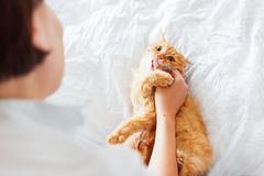 Ginger cat bites woman's hand. Stock Images