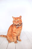 Ginger cat  with the bow sitting on the wooden background . Animal portrait. Cozy spring morning at home. Cute background Royalty Free Stock Photography