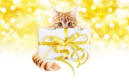 Ginger cat and box gift present with golden ribbon bow Isolated Royalty Free Stock Images