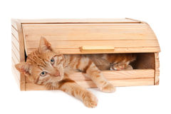 Ginger cat in a bread box Royalty Free Stock Photos
