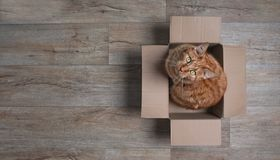Ginger cat in a cardboard box looking curious up to the camera. stock photography