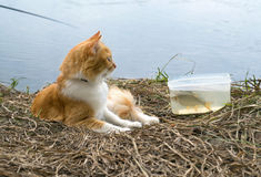 Ginger cat with caught fish on fishing time. Royalty Free Stock Photography