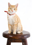 Ginger cat on chair Royalty Free Stock Photos