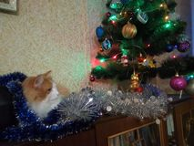 THE Ginger cat and chrismas tree stock image