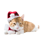 Ginger cat in a Christmas hat and scarf Royalty Free Stock Photo