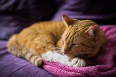 Ginger Cat de sommeil adorable Images libres de droits