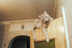 Ginger Cat on the Door at Home. Ginger Cat at the Top of the Door at Home royalty free stock images