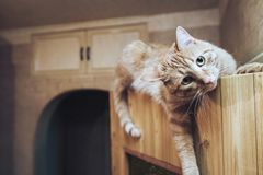 Ginger Cat on the Door at Home. Ginger Cat at the Top of the Door at Home stock image