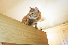 Ginger Cat on the Door at Home. Ginger Cat at the Top of the Door at Home royalty free stock photos