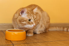 Ginger cat eating dry food Royalty Free Stock Photography