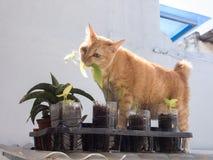 Ginger Cat Eating Leaf stock foto's