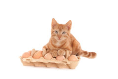 Ginger cat with eggs. A Looking ginger kitten with both paws on eggs, isolated on white Stock Photos