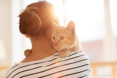 Ginger Cat Embracing Owner royalty-vrije stock afbeelding