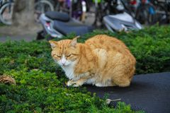 Ginger Cat en la tabla Foto de archivo libre de regalías