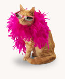 Ginger cat with feather boa (and shadow). Ginger cat with feather bower and sun glasses(and shadow) on white backround Stock Images