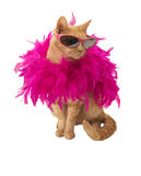 Ginger cat with feather boa (and shadow). Ginger cat with feather bower and sun glasses(and shadow) on white backround Stock Image