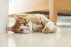 Ginger cat on floor. Image of ginger cat lying on the floor.Bed in background Royalty Free Stock Photography