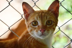 Ginger cat in front of the iron net Royalty Free Stock Images