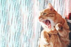 Ginger Cat geeuwt stock afbeeldingen
