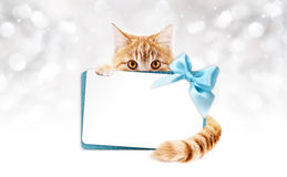 Ginger cat with gift card and blue ribbon Stock Photo