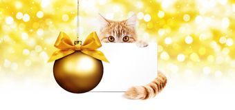 Ginger cat and gift card with golden christmas ball Isolated on Stock Image