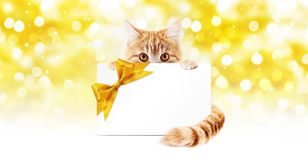 Ginger cat and gift card with golden ribbon bow Isolated on chri Stock Image