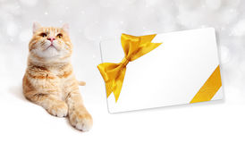 Ginger cat and gift card with golden ribbon bow  Stock Photos