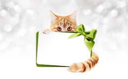Ginger cat with gift card and green ribbon Stock Photos