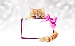 Ginger cat with gift card and purple ribbon bow Royalty Free Stock Photo