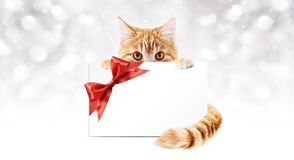 Ginger cat with gift card and ribbon bow Stock Images