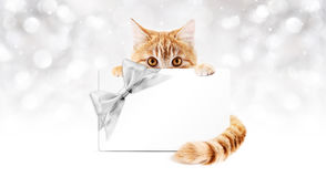 Ginger cat with gift card and silver ribbon bow Stock Photos