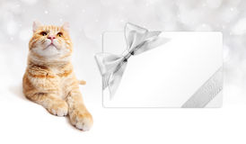 Ginger cat and gift card with silver ribbon bow  Royalty Free Stock Photo