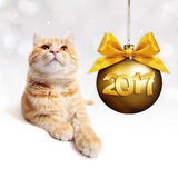 Ginger cat and golden christmas ball with gold satin ribbon bow Stock Images