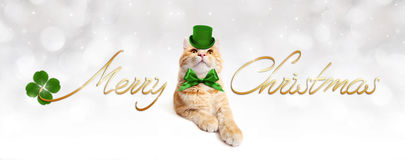 Ginger cat with golden merry christmas text with green clover, r. Ibbon bow, on white background royalty free stock image