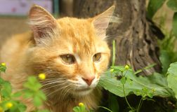 Ginger cat in the grass royalty free stock photos