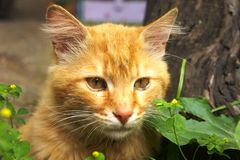 Ginger cat in the grass royalty free stock images