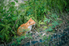 Ginger cat in grass Royalty Free Stock Images