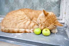 Ginger cat with green apples Royalty Free Stock Image