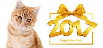 Ginger cat and happy new year 2017 text with ribbon bow Royalty Free Stock Photo