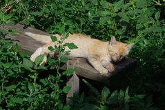Ginger cat has a sun bath on the old bench surrounded with grass and plants stock photo